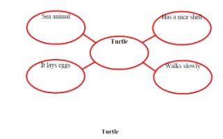 تقرير Turtle لغة إنجليزية للصف السادس
