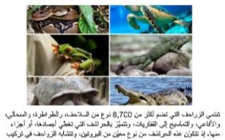 تقرير احياء عاشر الزواحف