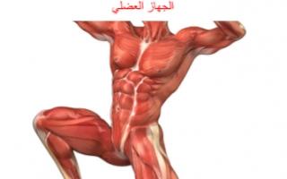 تقرير احياء حادي عشر الجهاز العضلي