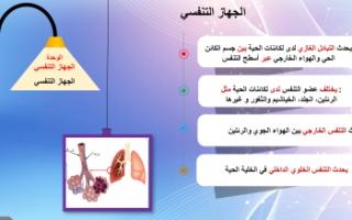 تقرير علوم ثامن الجهاز التنفسي