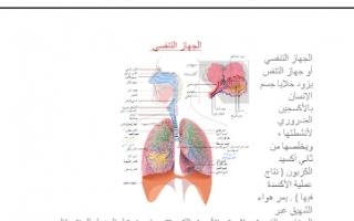 تقرير أحياء للصف الحادي عشر الجهاز التنفسي