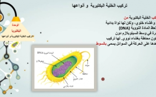 تقرير علوم للصف السادس تركيب الخلية البكتيرية وانواعها