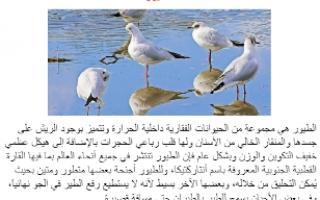 تقرير احياء عاشر الطيور